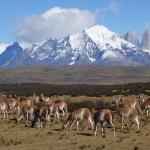 Argentine & Patagonie Chilienne